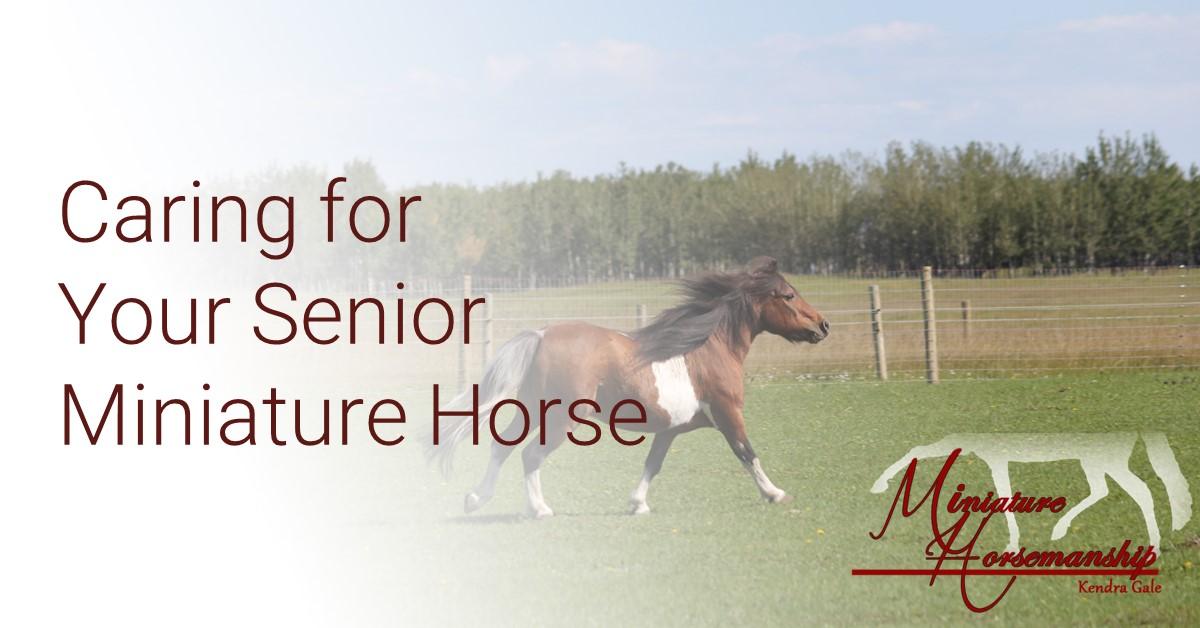 MH-Senior Horses