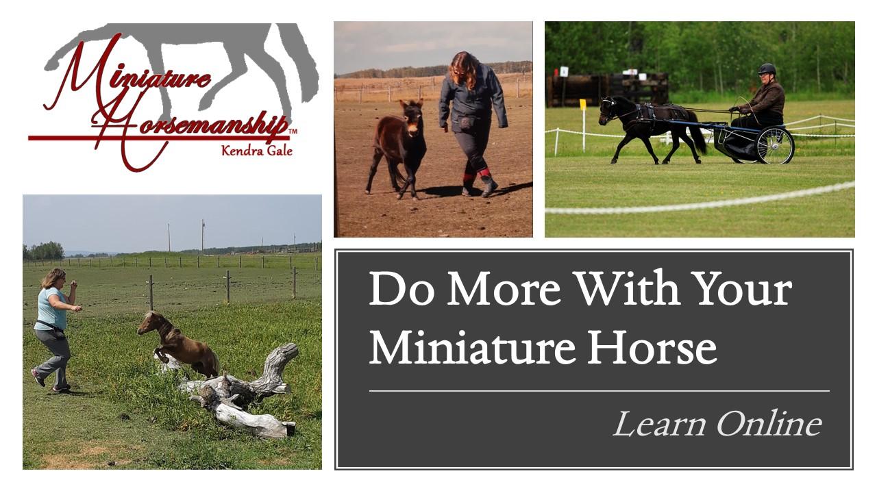 Miniature Horsemanship ™